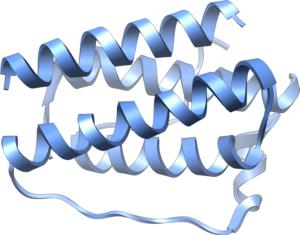 leptyna struktura