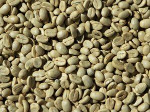 zielona kawa w ziarnach